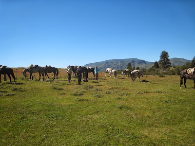 Horses from Estancia Huechachue