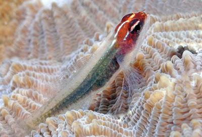 رحلة أعماق البحار التعرف مخلوقات