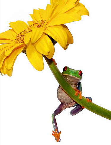 along25, frog, webbek