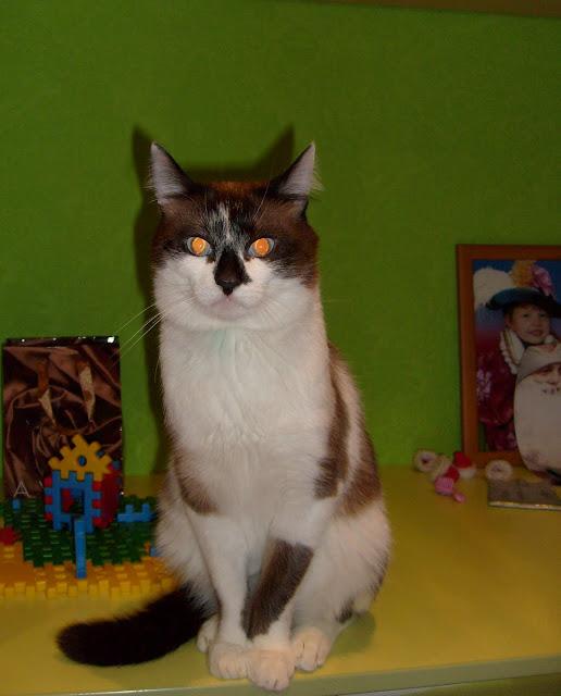 кот Фунтик позирует