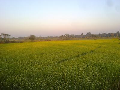 Flower field india