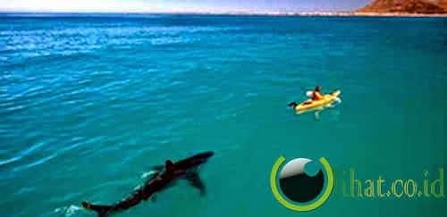 Hiu Mengikuti kayaker