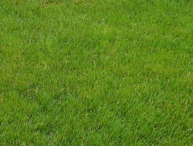 Grass Stock by Fairiegoodmother Teks dengan Efek Kaca Transparan di photoshop