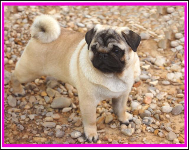 Concurso Nacional Canino de Rivas Vaciamadrid. Mejor Cachorro Grupo 9.
