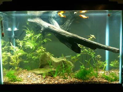 Freshwater Aquarium To A Saltwater Aquarium