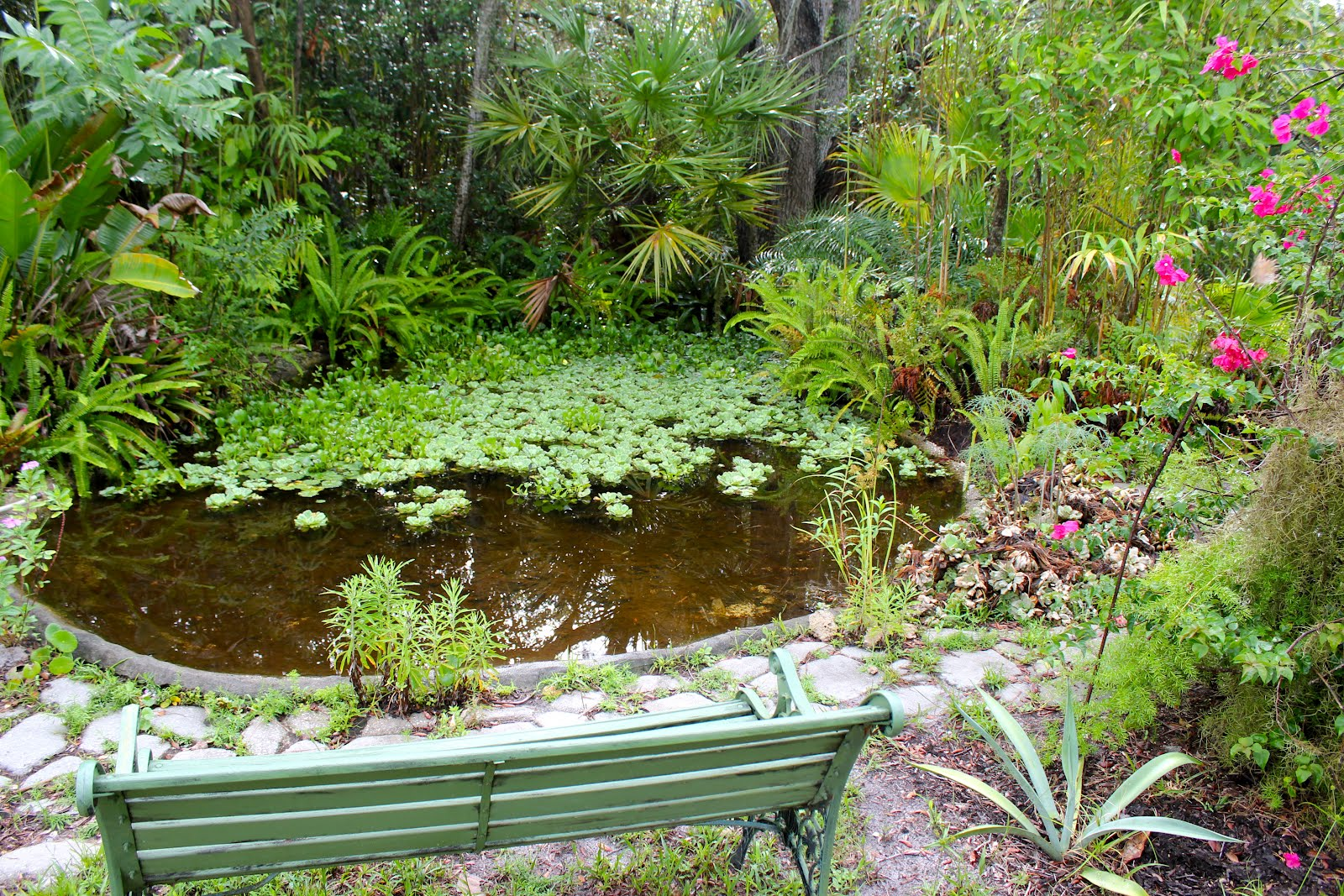 Tropical rains return to florida phillip 39 s natural world for How much to build a koi pond