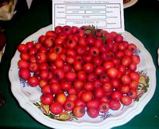 Azzeruolo rosso ricette