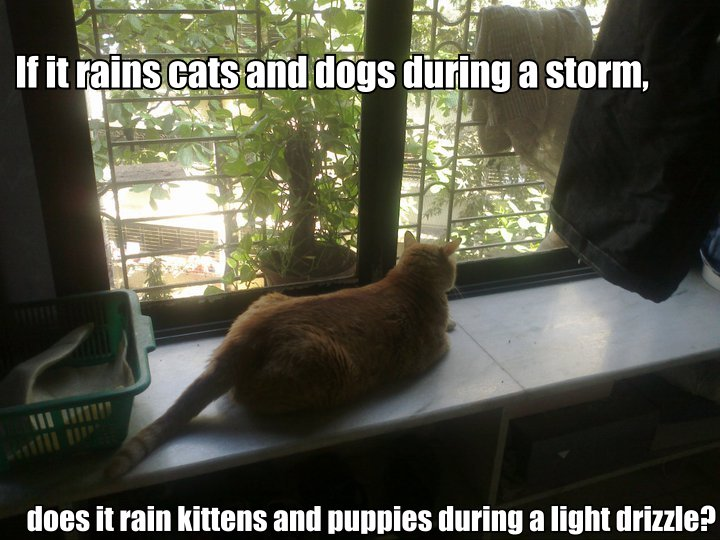If it rains cats and dogs during a storm, does it rain kittens and puppies during a light drizzle?