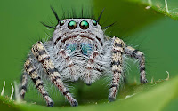 Spiders HD 19
