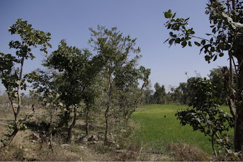 INDIA 2011: Jessica's DWC project (wall in the distance and crops planted on the fertile irrigated)