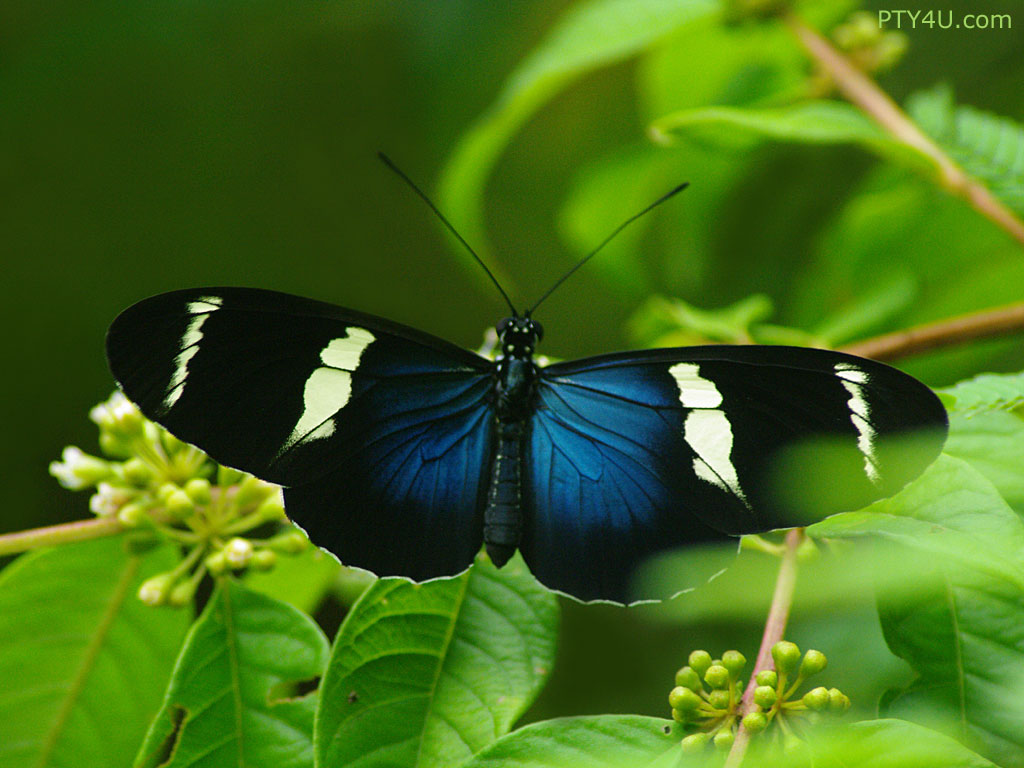 latest wallpapers of butterflies - photo #42