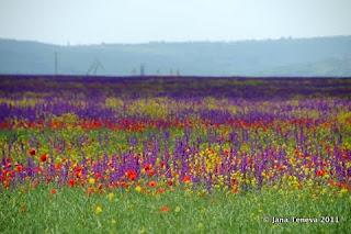 Flowers Varna