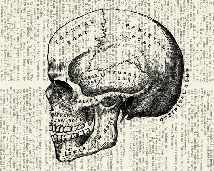 12-Human-Skull-Artwork-Jean-Cody-Vintage-Dictionary-Page-Art-Prints-www-designstack-co