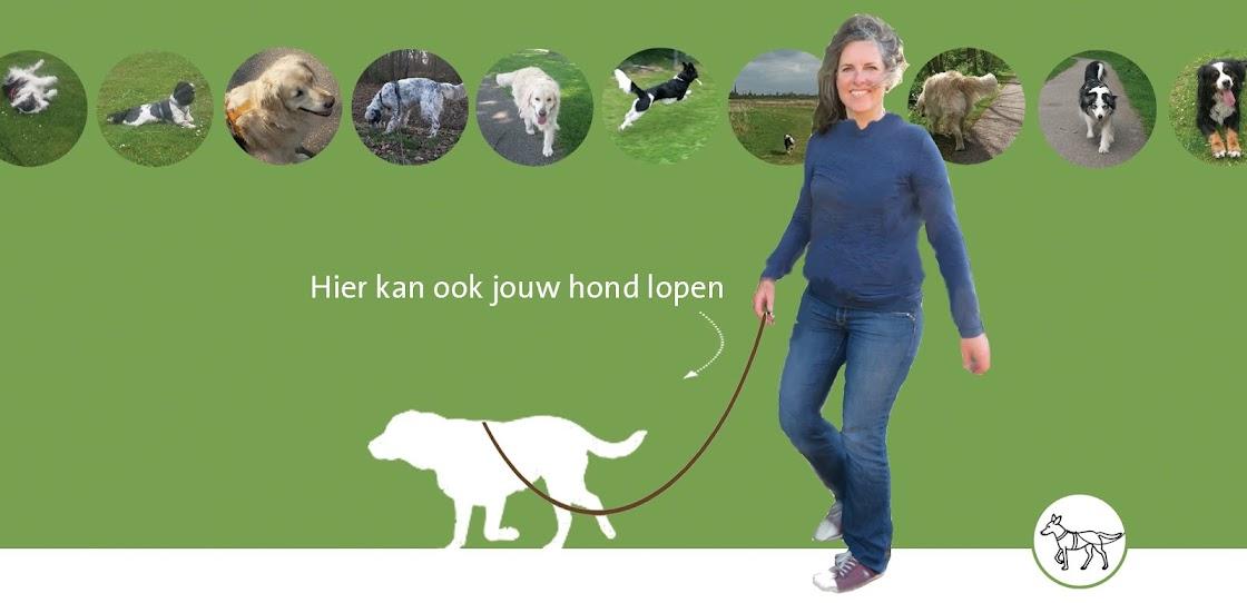 Honden Beusichem - e.o. | Individuele uitlaatservice, positieve training, hondenwandelcoaching