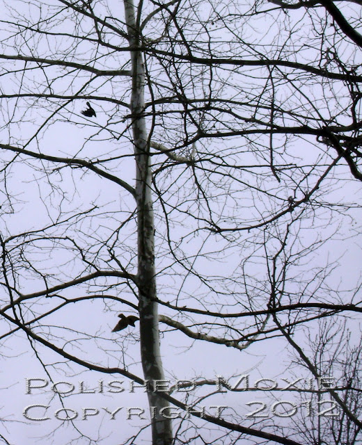 Image of crow dive bombing a hawk in the sky.