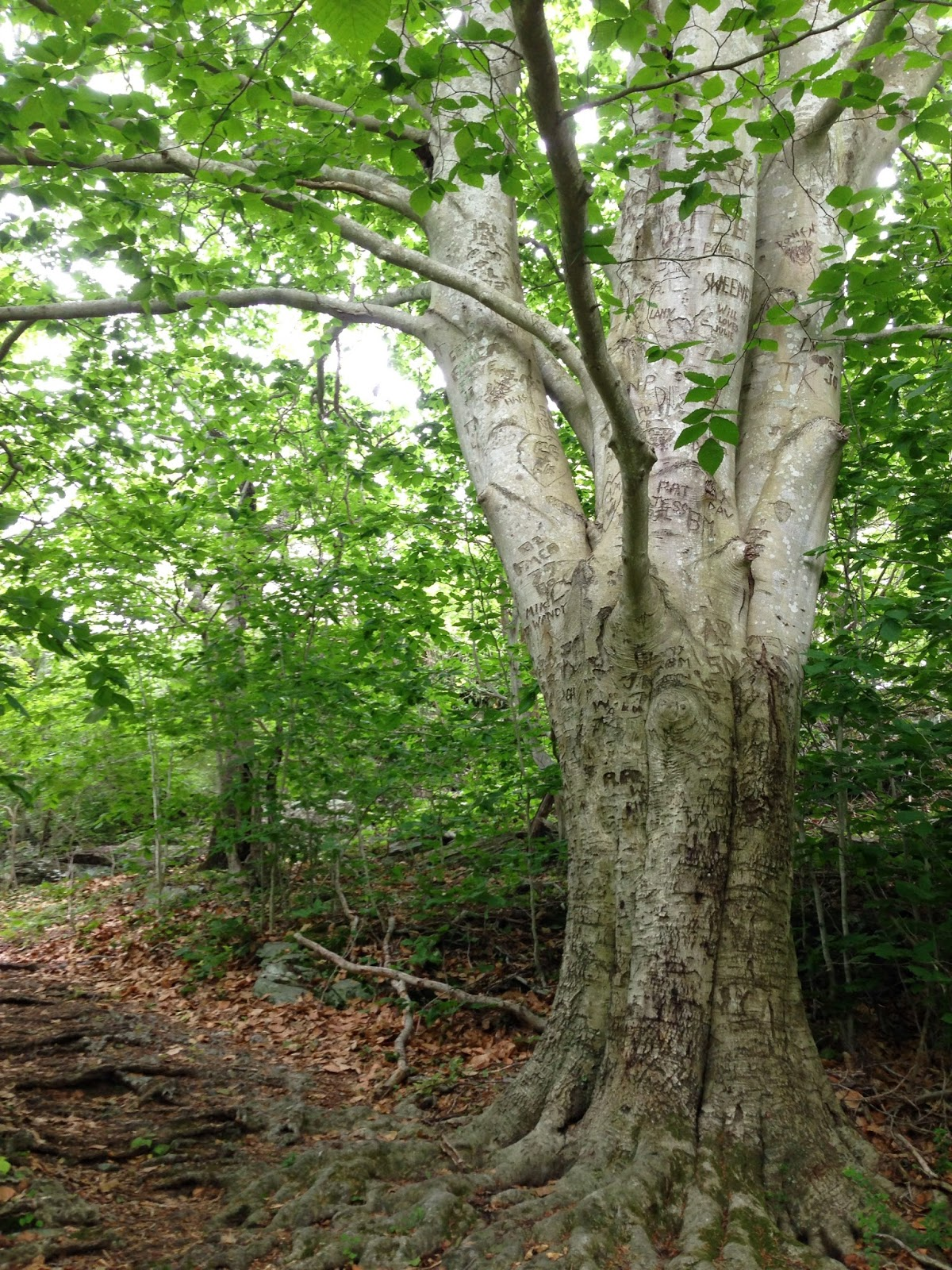 Tree - Flotsam of the Mind