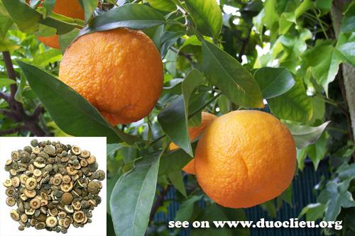 Citrus aurantium L.; 2. Citrus sinensis Osbeck