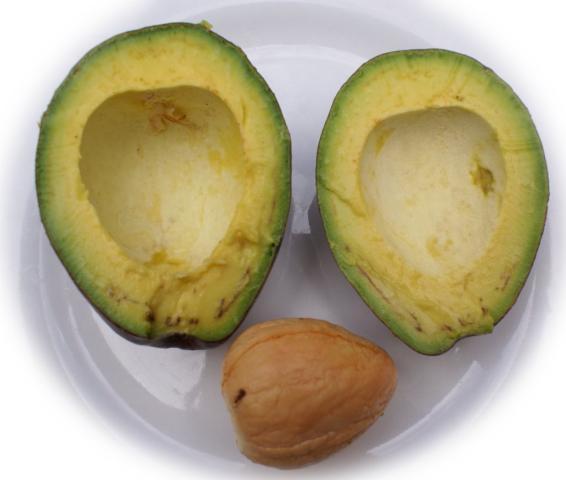 traditiomedic  using avocado seeds to cure diabetes