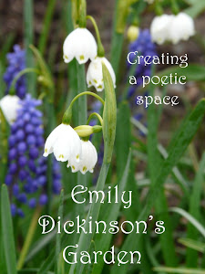 My Blog about Poetry and Gardening