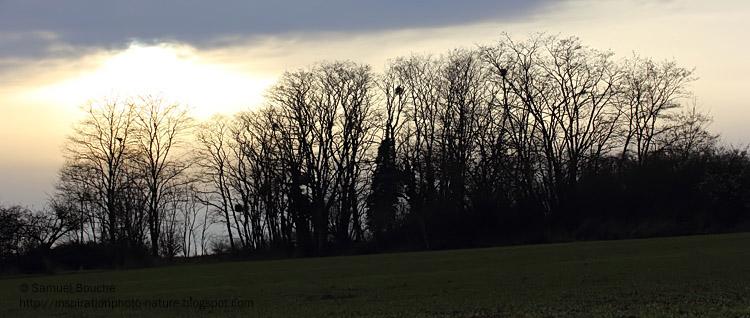 arbres au soleil couchant
