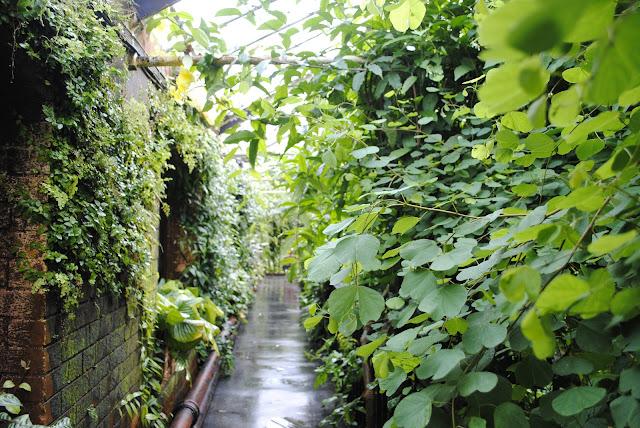The Tropical Ravine Botanical Garden