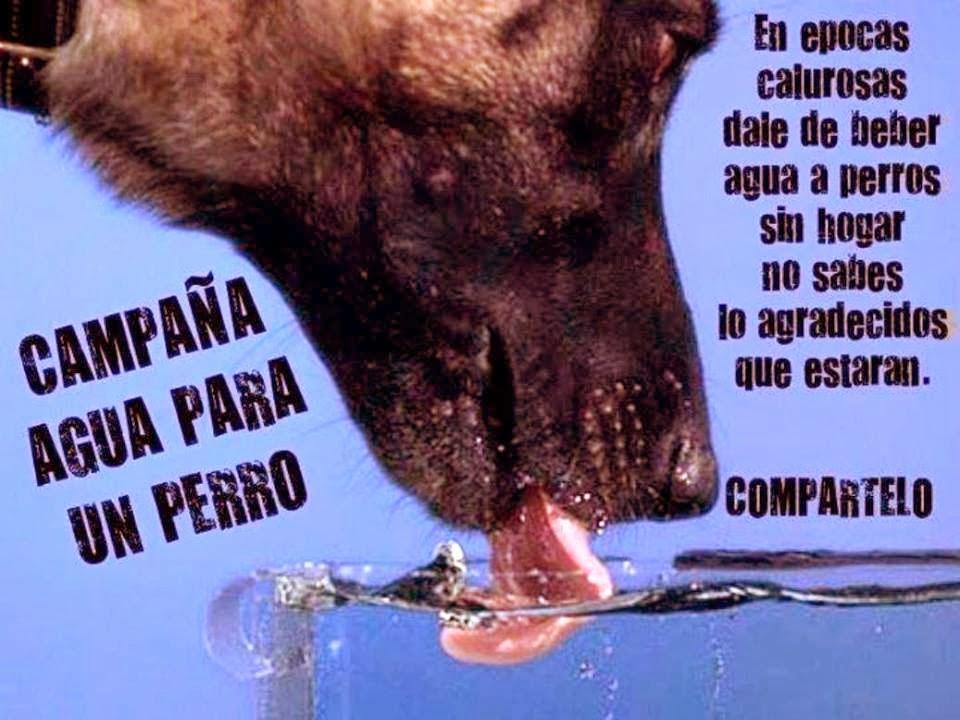 Agua para un perro