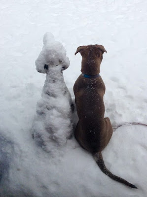 Similar alike snow dogs