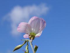東京で賃貸マンションを借りる Blog の花