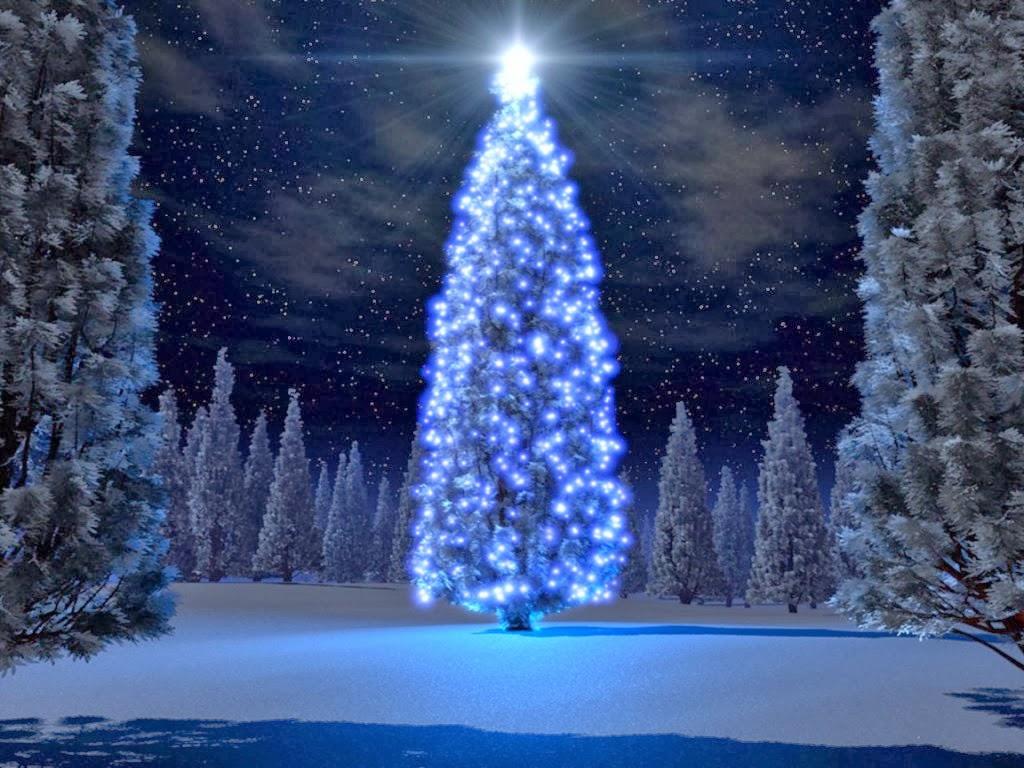 Rbol de navidad o abeto navide o amor reflexi n humor - Cuento del arbol de navidad ...