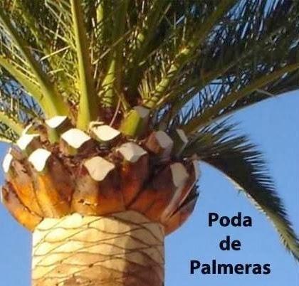 Poda de palmeras en m laga quien debe realizarla - Empresas de jardineria en malaga ...