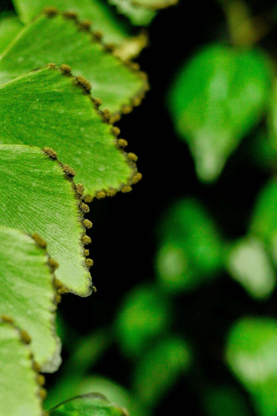 plants, vertical garden, interior landscape, interiorscape, office, professional, maintenance, in situ, biophilia,  indoor, plant, garden, terrarium, fern, sori, spore