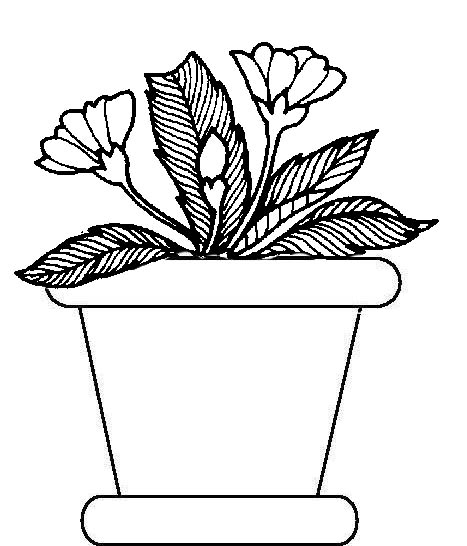 Potted Plants Coloring Pages Plants Coloring Page