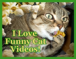 funny cat videos for kids  Daily Pictures Funny Cat Videos For Kids