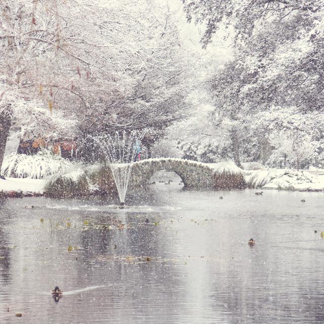 Galia Alena Queenstown Gardens Snow