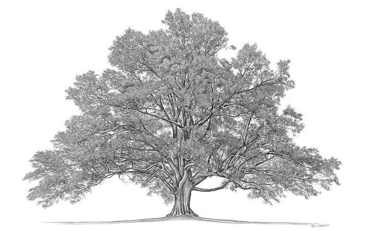 Free Family Tree Research http://weesa-asiseeit.blogspot.com/2011_07 ...