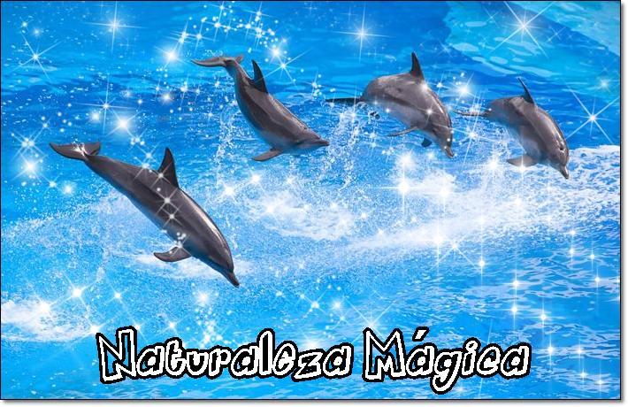 Imagenes de delfines en movimiento gratis - Imagui