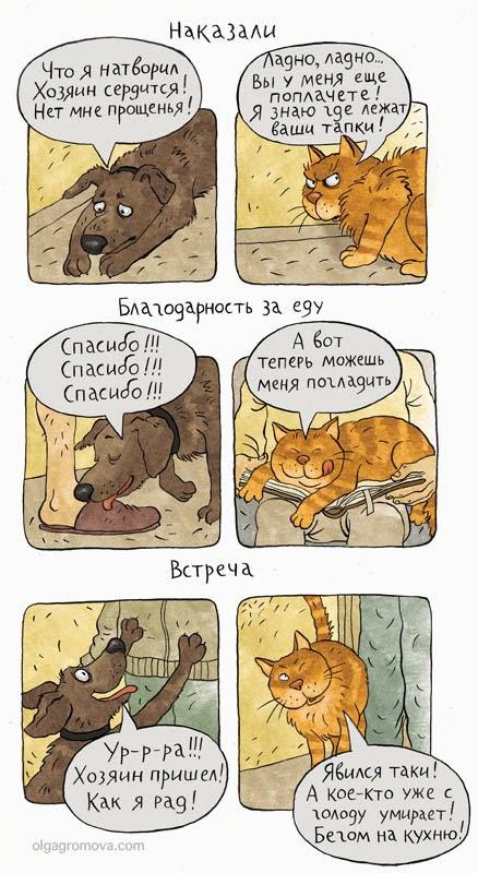 Некоторые различия между котами и собаками при одинаковых обстоятельствах