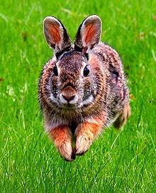 Wat bandnaam Carter USM betekent - Springend konijn