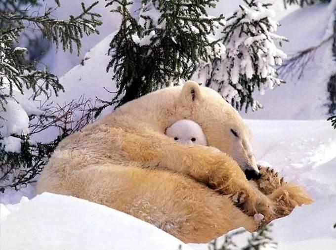 anak beruang polar