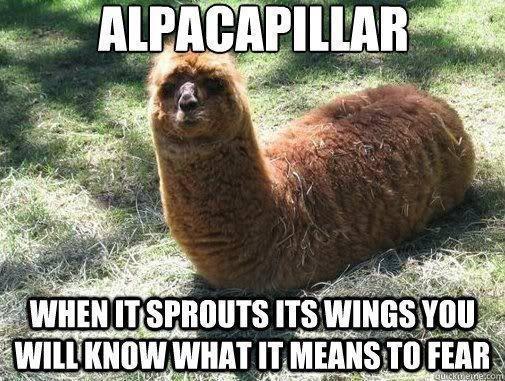 Animal Animal Animal