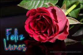 imagen de lindo lunes con rosas
