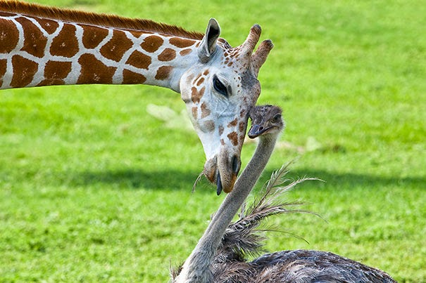 Wilma the Ostrich and Bea the Giraffe