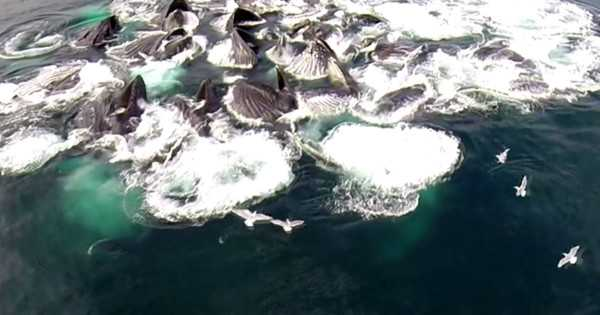 A Drone Was Flying Over Alaskan Waters And Caught Something Unbelievable On Tape