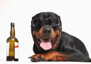 [Imagen: cerveza-perro-300x210.jpg]