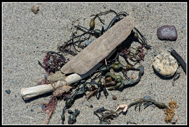 Nova Scotia, Hirtle's Beach; Bone; Porpoise