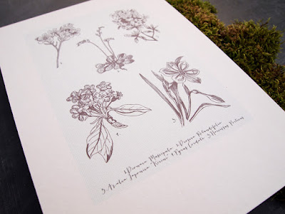 A4 botanical illustration print at shop.alfies-studio.com