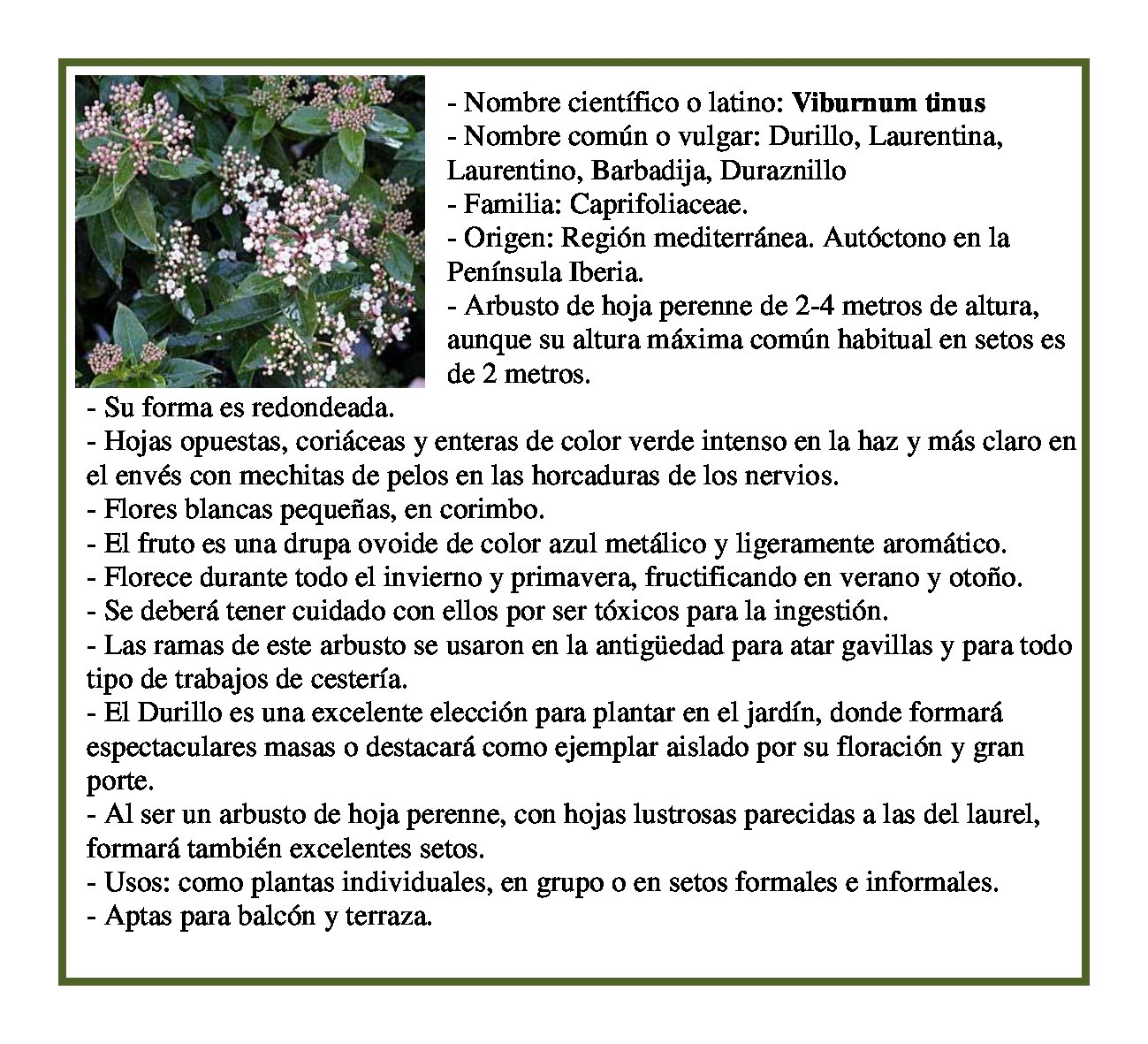 Profundiza 2014 nuestros proyectos nuestro trabajo de for Proyecto de investigacion de plantas ornamentales