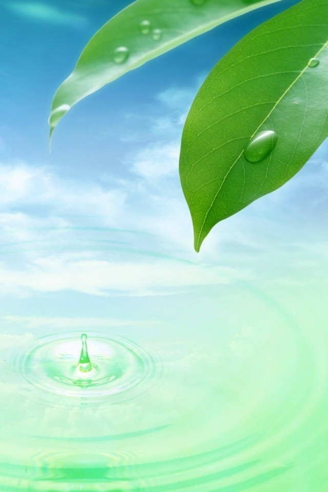 Cute Green Leaf And Water Hd Wallpaper For Iphone