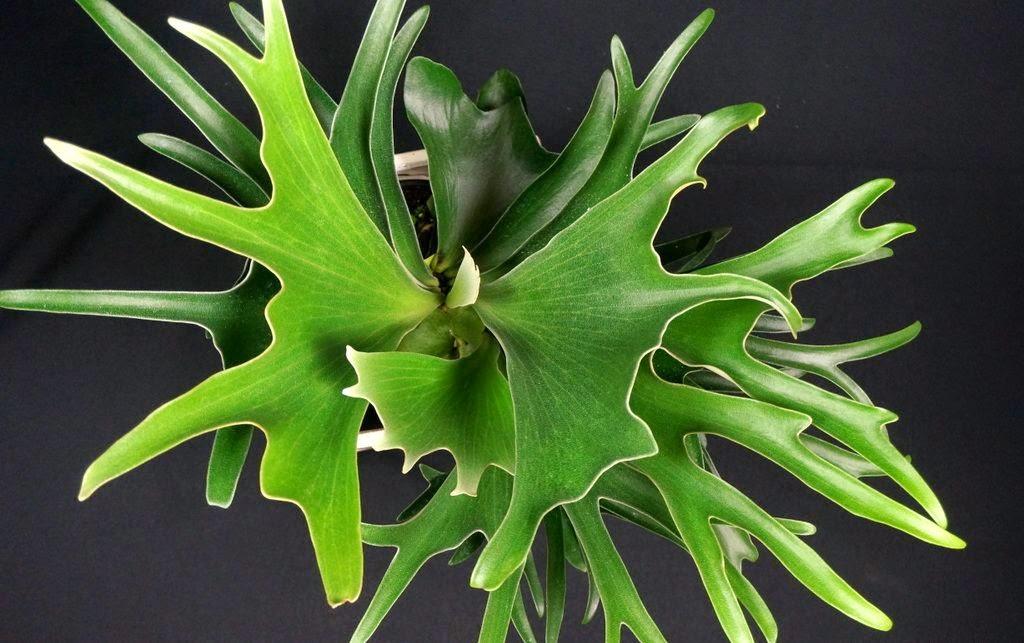 Mieszkalnie Doniczkowe Rośliny Cieniolubne Do Domu Potted Plants
