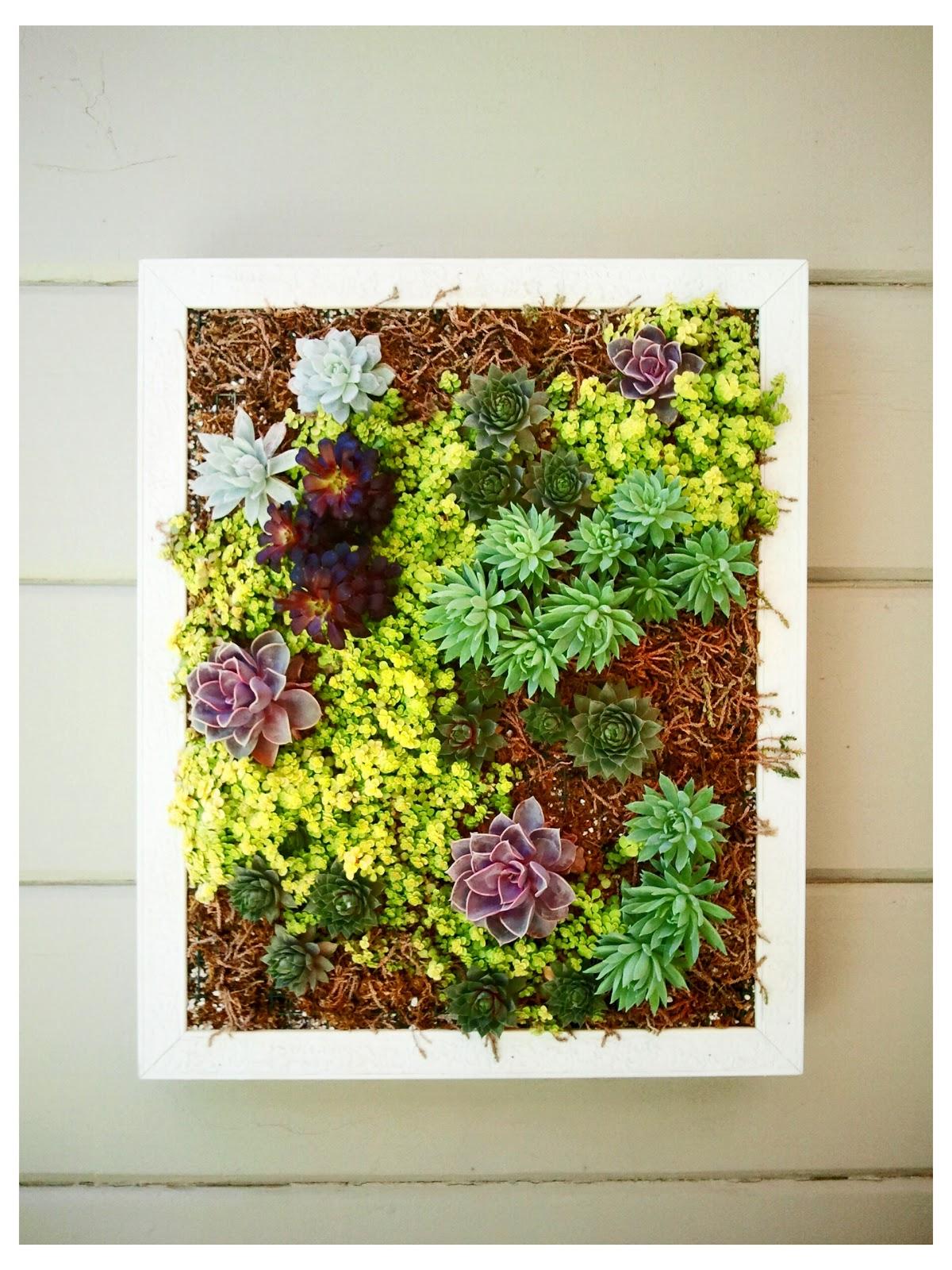 vertical succulent frame 1
